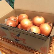 淡路島産玉ねぎ5kg M〜Lサイズ混合 M〜L5kg  果物や野菜などのお取り寄せ宅配食材通販産地直送アウル