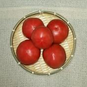 有機栽培のトマト(5個) 5個(約750g) 山梨県 通販