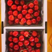 さくらんぼ(秀品500g×2) 1kg 果物(さくらんぼ) 通販