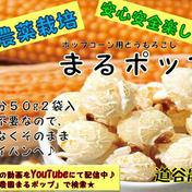 ポップコーン豆 丸ポップ 3セット 道谷農園