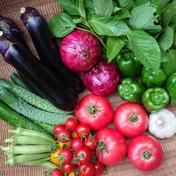 もり自然農園の無農薬旬野菜セット 【2~3人分】旬のお野菜約8種類の詰め合わせ 果物や野菜などのお取り寄せ宅配食材通販産地直送アウル