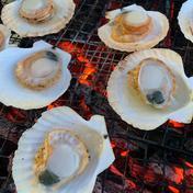 (株)日本魚類 【真空冷凍】漁師が喰うホタテ 6枚入り1パック 6枚入り1パック