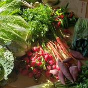 京都美山の京野菜満足セット!100サイズ 10キロまで 京都府 通販