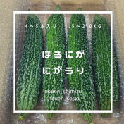 ほろにが🥺にがうり4-5本 1.5-2.0kg 果物や野菜などのお取り寄せ宅配食材通販産地直送アウル
