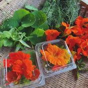 自然栽培のハーブ&エディブルフラワーセット 1キロ未満 野菜 通販