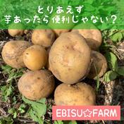 【訳あり】瀬戸内 ホクホク系 じゃがいも お試し フードロス 父の日 3キロぐらい 野菜(じゃがいも) 通販