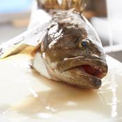 壱岐産 高級クエまるごと一本 約3キロサイズ 約3キロサイズ 長崎県 通販