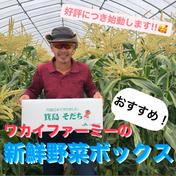 ワカイファーミーの新鮮お野菜ボックス❣️ 野菜の詰め合わせ(2500円) 広島県 通販