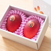 たなか果樹園 華マンゴー 3L2玉化粧箱 450~509g×2玉