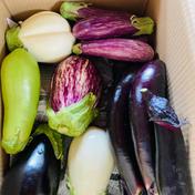 みずみずしい朝取り茄子セット 野菜セット 2kg前後 果物や野菜などのお取り寄せ宅配食材通販産地直送アウル