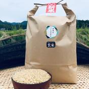 瀬戸内讃岐 令和2年産コシヒカリ100%玄米5キロ 紙袋入り 玄米 5kg ふじもとファーム
