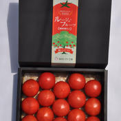 樹になる「ルージュフルーツトマト」 1kg 野菜(トマト) 通販