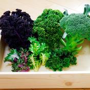 【健康野菜セット②】 --- 60サイズDB 約700g 群馬県 通販