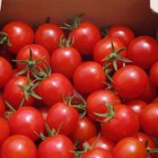 有機栽培ミニトマト  あまっこ  1kg  1㎏ 果物や野菜などのお取り寄せ宅配食材通販産地直送アウル