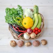 【送料込み!!自然栽培&固定種のみ!1名様サイズ】『まえむき。』の、自然と一緒に育てた旬の野菜セット5種類 旬の野菜セット5種類 野菜 通販
