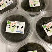 大分県佐伯産 湯通し刻みアカモク 100g 8パック 魚介類(海藻) 通販