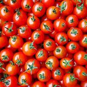 フルーツミニトマト【お試し500g】 500g キーワード: お試し 通販