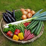 さくま農園「夏のセレクトお野菜ボックス」 約3~5㎏ 果物や野菜などのお取り寄せ宅配食材通販産地直送アウル