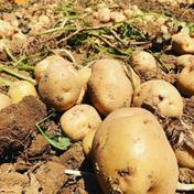庄山農園 【お中元】北海道厚沢部町産きたあかり 5kg