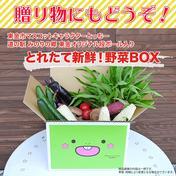 東金市マスコットキャラクター「とっちー」段ボールに入れてお届け!採れたて新鮮野菜BOX 5kg程度 道の駅みのりの郷東金