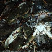 朝取れ鮮魚!(イシカニ) 1キロ(6〜10匹) 果物や野菜などのお取り寄せ宅配食材通販産地直送アウル