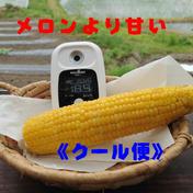 夏の恵(サニーショコラ)メロンより甘い!糖度18°〜23°。 5kg以内(13〜14本) 果物や野菜などのお取り寄せ宅配食材通販産地直送アウル