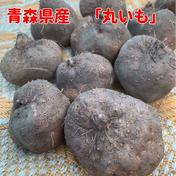丸いも 2.0kg(6個)青森県産 お試し 2.0kg(6個) 青森県 通販