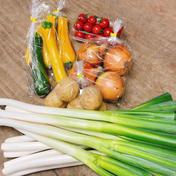 池ちゃん農園おまかせ野菜セット 約3.5kg 野菜 通販