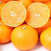 お試し!柑橘の大トロ『せとか』(ご家庭用) 1.5㌔ 果物(みかん) 通販