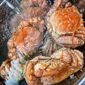 訳あり 北海道毛ガニボイル冷凍✖️1.5キロ 1.5キロ 魚介類(カニ) 通販