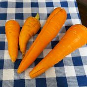 【野菜ジュース用】訳ありにんじんを100サイズに詰めれるだけ 約10キロ 野菜(人参) 通販