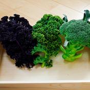 【健康野菜セット①】 --- 60サイズDB 約700g 群馬県 通販
