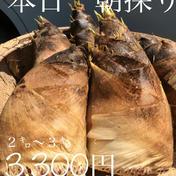 マルキュウフルーツ 山梨県産朝どりタケノコ 2キロ~3キロ