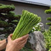 【訳あり】博多アスパラガス 細目 1キロ 1kg 果物や野菜などのお取り寄せ宅配食材通販産地直送アウル