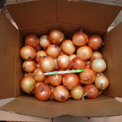 SSサイズ玉ねぎ 約9kg 果物や野菜などのお取り寄せ宅配食材通販産地直送アウル