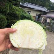 3個おかえりモネ」の登米市よねやま町のキャベツ!期間限定品 1.5キロぐらい 3個 野菜(キャベツ) 通販