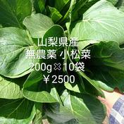 マルキュウフルーツ 無農薬 小松菜 2キロ