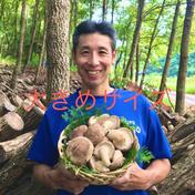 環の森(わのもり) 【原木生しいたけ】1kg 大きめサイズ(約30〜40個)   〜森から育てる香る木の子シリーズ〜 1kg