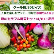 【大好評】★+1品増量中 『夏のカラフル野菜セットM/8+1品目』 80サイズ箱いっぱいにカラフル野菜と一般野菜を計8品目、今なら増量中です! 食材ジャンル: 野菜 > セット・詰め合わせ 通販