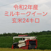 特別栽培米ミルキークィーン玄米24キロ ミルキークィーン玄米24キロ 三重県 通販