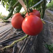 蔬菜園湯澤 王様トマト マイロック 24個 24個入 3㎏