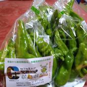 市民ひまわり農園の甘ししとう 一袋200g入り×5袋 果物や野菜などのお取り寄せ宅配食材通販産地直送アウル