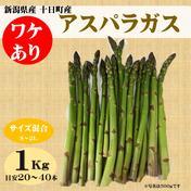 ワケあり アスパラガス 1kg(サイズ混合) 新潟県産 1kg 野菜(アスパラガス) 通販