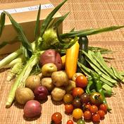五味農園のお野菜箱 1.5kg程度 果物や野菜などのお取り寄せ宅配食材通販産地直送アウル