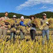 玄米5キロ化学肥料、農薬不使用コシヒカリ 5キロ 果物や野菜などのお取り寄せ宅配食材通販産地直送アウル