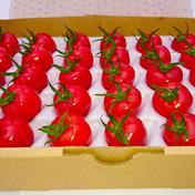 小田原北条トマト 600g 果物や野菜などのお取り寄せ宅配食材通販産地直送アウル