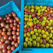 あられファーム 少なめ ミニトマト、中玉トマトセット! 1kg