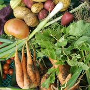 【夏ギフト】夏の京野菜ボックス!【100サイズ】【7~9品目】 100サイズ、10キロ以下 キーワード: 夏ギフト 通販