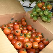 訳あり!!体に優しいミニトマト 約1kg 約1kg 果物や野菜などのお取り寄せ宅配食材通販産地直送アウル