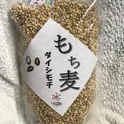 上野原ゆうきの輪 もち麦(ダイシモチ)精麦800g 400gパック✖︎2